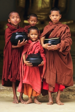 moinillons-birmanie